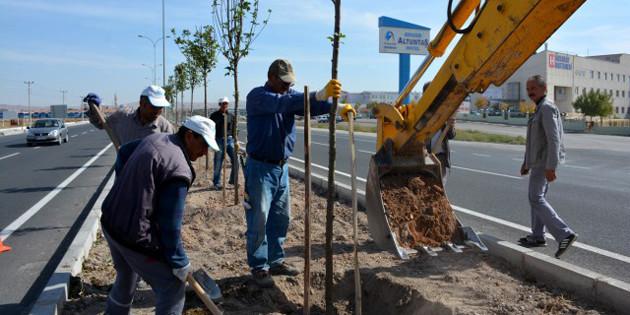 E-90 Karayolu orta refüjüne 1500 çınar ağacı dikiliyor
