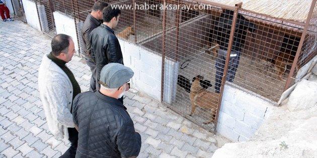 AKHAYKOR'dan Ürgüp ve Avanos hayvan barınaklarına tam not