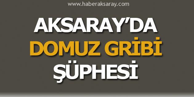 Aksaray'da domuz gribi şüphesi!