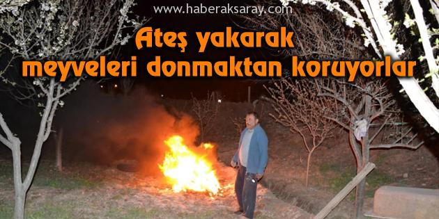 Ateş yakarak meyveleri donmaktan koruyorlar