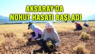 Aksaray'da nohut hasatı başladı