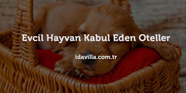 Evcil Hayvanlarınız ile Beraber Kazdağları'nda Tatil Yapmak için Büyük Fırsat!
