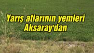 Yarış atlarının yemleri Aksaray'dan