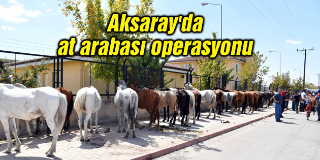 Aksaray'da at arabası operasyonu