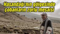 Hasandağı'nın gölgesinde çobanların zorlu mesaisi