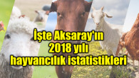 İşte Aksaray'ın 2018 yılı hayvancılık istatistikleri