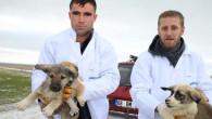 Ölüme terk edilen yavru köpeklere şefkat eli uzatıldı
