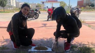Aksaray Belediyesi hayvansever gençlerin taleplerine sessiz kalmadı
