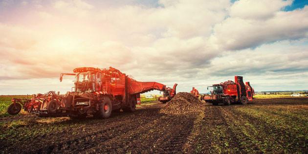 Devlet desteğiyle tarımsal ve hayvansal üretim sürüyor