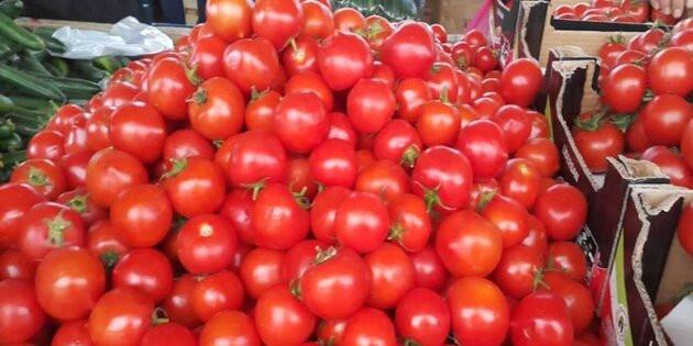 Tuz Gölü havzasının yeni alternatif ürünü domates