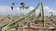 2 bin 373 çiftçiye 7 milyon lira afet yardım parası ödenecek