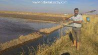 Aksaray'da toprak suyla buluşuyor