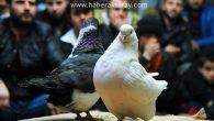 Kuş meraklıları Aksaray'da buluşuyor