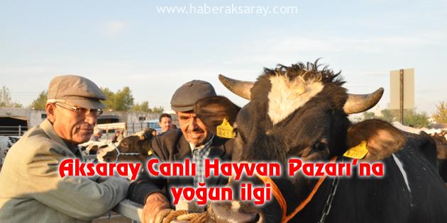 Aksaray Canlı Hayvan Pazarı'na yoğun ilgi