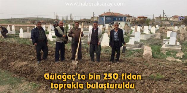 Gülağaç'ta bin 250 fidan toprakla buluşturuldu