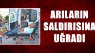 Aksaray'da arı saldırısı: 1 yaralı