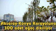 Aksaray-Konya Karayoluna 300 adet ağaç dikiliyor