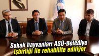 Sokak hayvanları ASÜ-Belediye işbirliği ile rehabilite ediliyor