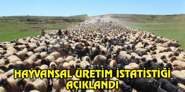 Aksaray'da hayvan varlığı açıklandı