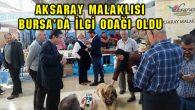 Aksaray Malaklısı Bursa'da ilgi odağı oldu