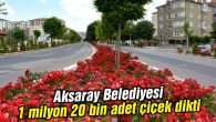 Aksaray Belediyesi 1 milyon 20 bin adet çiçek dikti