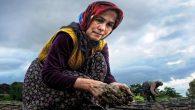 Tarımda 75 kadın girişimciye uygulamalı girişimcilik eğitimi