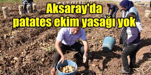 Aksaray'da patates ekim yasağı yok