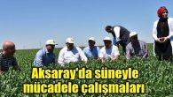 Aksaray'da süneyle mücadele çalışmaları