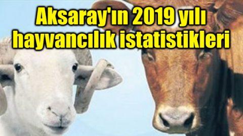 İşte Aksaray'ın 2019 yılı hayvancılık istatistikleri
