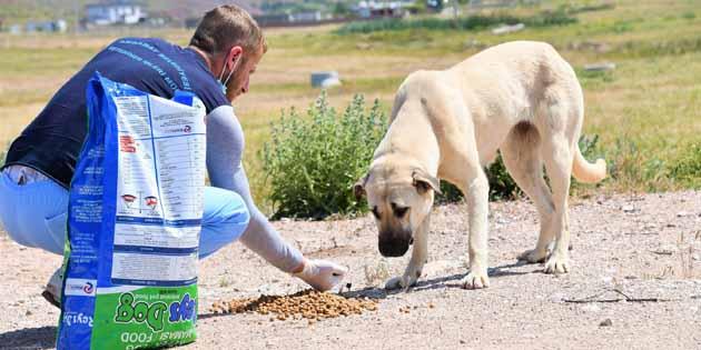 Sokak hayvanları için mama ve su desteği sağlanıyor