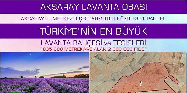 Türkiye'nin en büyük lavanta tesisi Aksaray'da kuruluyor