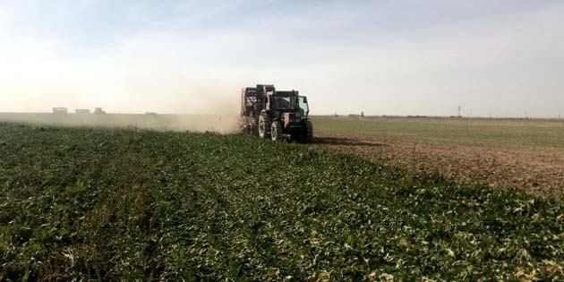 Aksaray'da şeker pancarı hasadı devam ediyor
