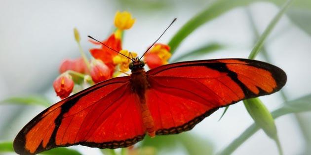 Kelebek Falı Ne Anlama Gelir