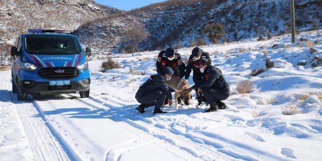 Aksaray'da Jandarma ekipleri doğaya yem bıraktı