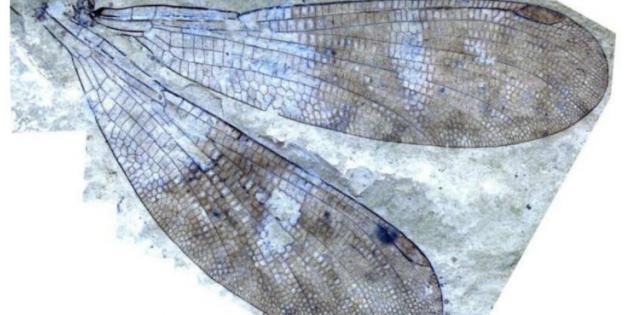 150 Yıllık Gizem Çözülerek Yeni Bir Böcek Türü Keşfedildi