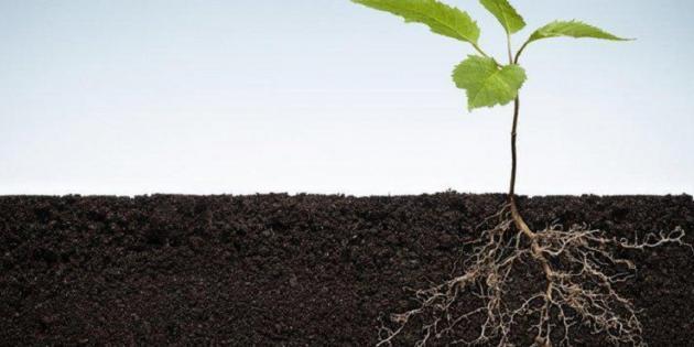 Bitki Kökleri Toprağa Nasıl Kazınıyor?
