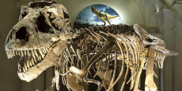Dinozorların Neden Devasa veya Küçük Oldukları Keşfedildi