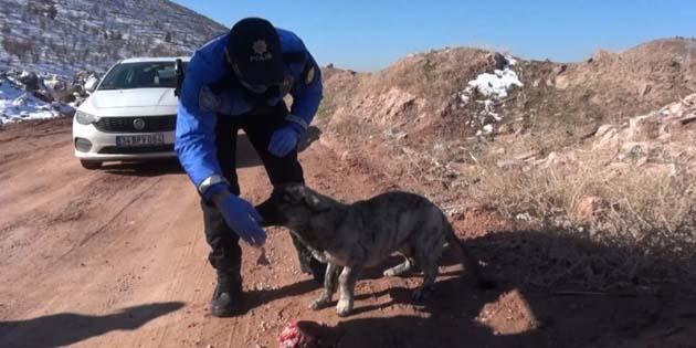 Aksaray'da HAYDİ polisleri sokak hayvanlarını unutmuyor