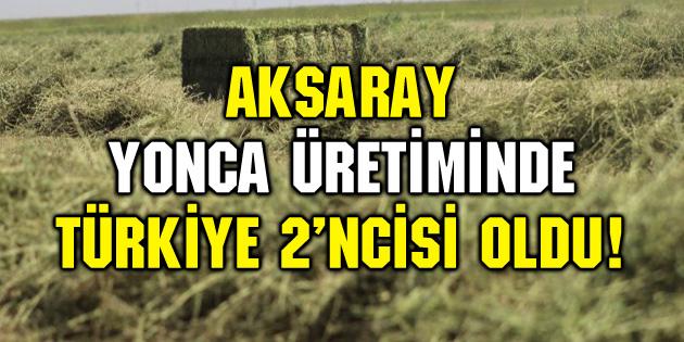 Aksaray, yonca üretiminde Türkiye 2'ncisi oldu!